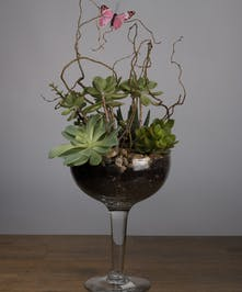Succulent Garden plant mix in a oversized margarita glass