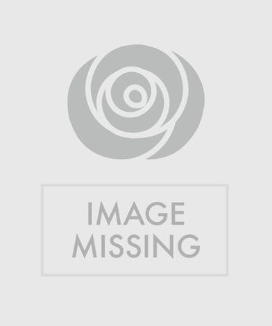 Vase of tropical flowers with birds of paradise and orchids