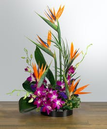 Tropical Design with Birds of Paradise and Orchids