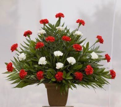 Sympathy arrangement with red and white carnations