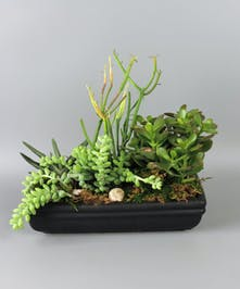 Planter with assorted succulent plants