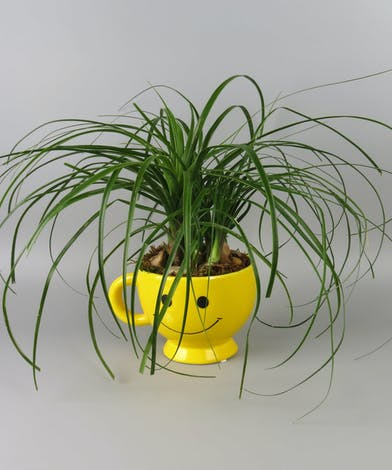 Yellow Happy Face Mug with plant