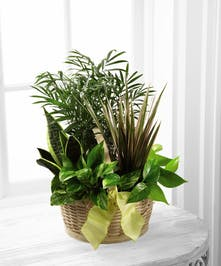 Assorted green plants in a basket
